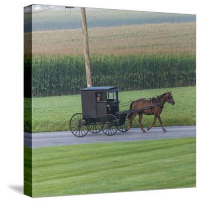 Horse Pulls a Buggy Along on a Country Road in Lancaster County, Pennsylvania