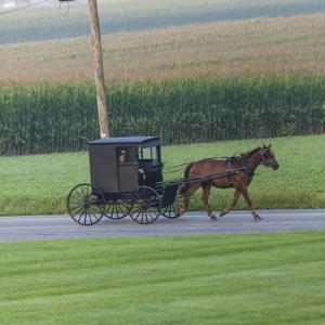 Horse Pulls a Buggy Along on a Country Road in Lancaster County, Pennsylvania by Richard Nowitz