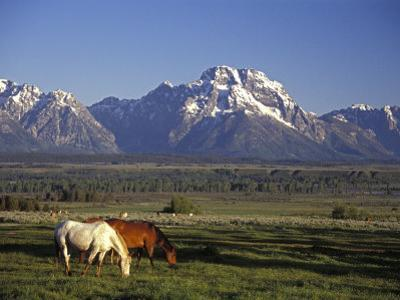 Horses Graze at Lost Creek Ranch in Moose, Wyoming by Richard Nowitz