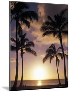 Palm Trees in Silhouette at Sunset on Oahu, Hawaii by Richard Nowitz