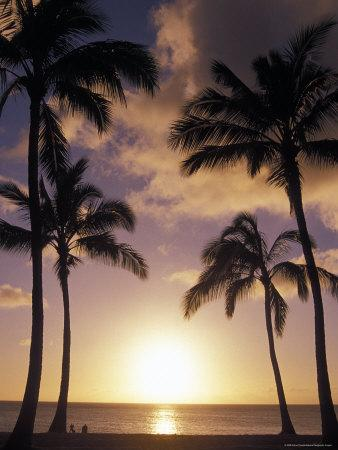 Palm Trees in Silhouette at Sunset on Oahu, Hawaii