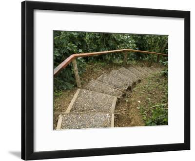 Stairway Through the Jungle at Welchez Coffee Plantation