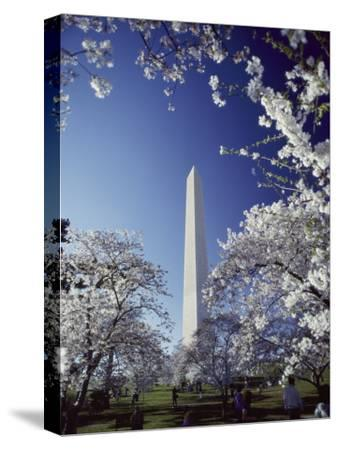 Washington Monument with Spring Tree Blossoms