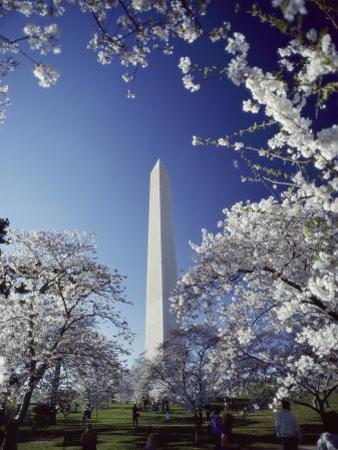 Washington Monument with Spring Tree Blossoms by Richard Nowitz