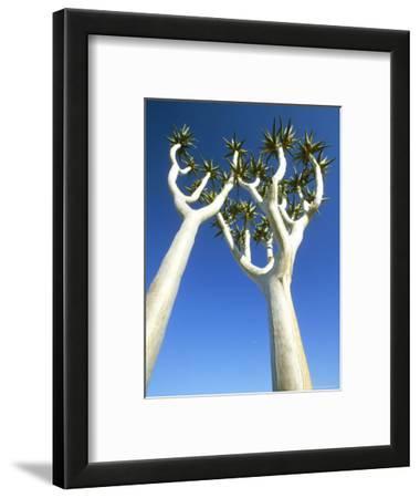 Quiver Tree, Namib-Naukluft Park, Namibia