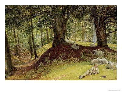 Parkhurst Woods, Abinger, Surrey