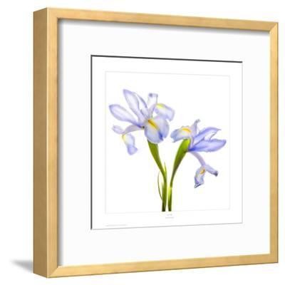 Iris It Blue