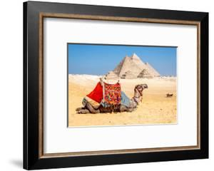 Camel Resting by the Pyramids, Giza, Egypt by Richard Silver