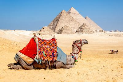 Camel Resting by the Pyramids, Giza, Egypt