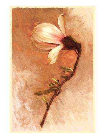 Magnolia and Cream I