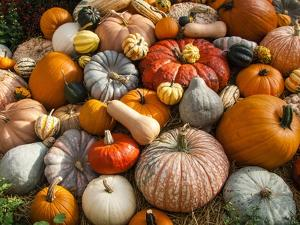 Pumpkin Display for Fall Festival by Richard T. Nowitz