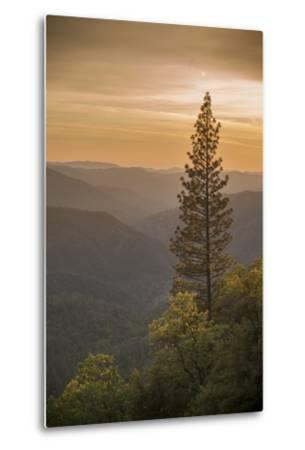 Sierra Nevada Mountains with Ponderosa Pine