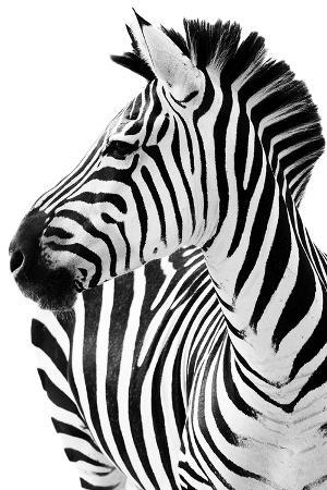 richard-the-zebra