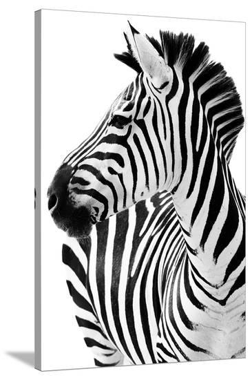 Richard The Zebra--Stretched Canvas Print