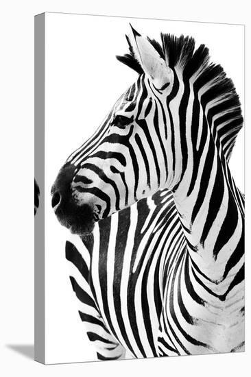 Richard The Zebra--Stretched Canvas Print