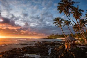 Return to Paradise by Richard Vandewalle