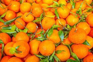 Oranges displayed in market in Shepherd's Bush, London, U.K. by Richard Wright