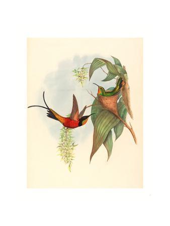 Topaza Pyra (Fairy Topaz), Colored Lithograph
