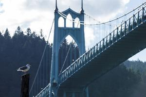Oregon, Portland, Cathedral Park, Western Gull in Front of St. John's Bridge by Rick A. Brown