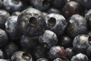 USA, Oregon, Keizer, Blueberries by Rick A. Brown