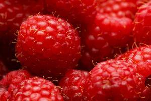 USA, Oregon, Keizer, Locally Grown Raspberries by Rick A. Brown