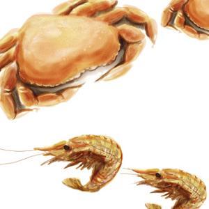 Illustrated Crab by Rick Novak