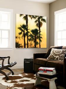 Morning Palm Tree I by Rick Novak