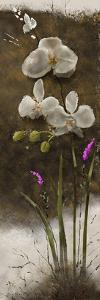 Orchid I by Rick Novak