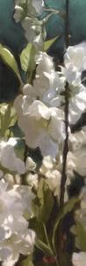 White Roses V by Rick Novak