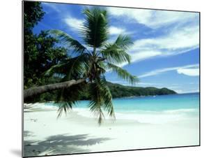 Coconut Palm on Beach, Seychelles by Rick Price