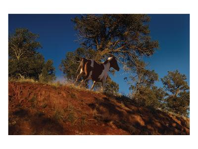Ridge Runner-Steve Hunziker-Art Print
