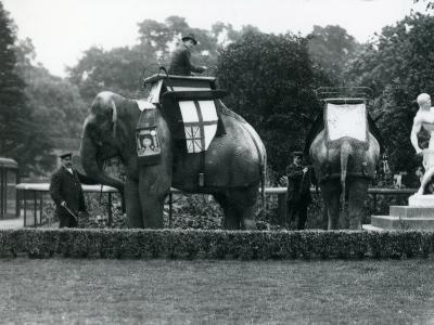 Riding Elephants Bedecked for the Peace Day Celebrations, 19th July 1919-Frederick William Bond-Photographic Print