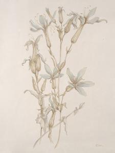 Botanicals Series Blue V by Rikki Drotar