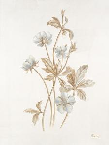 French Botanicals III by Rikki Drotar