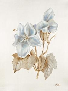 French Botanicals IV by Rikki Drotar