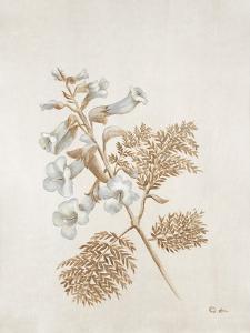 French Botanicals V by Rikki Drotar