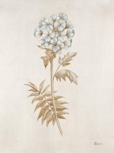 French Botanicals VI by Rikki Drotar