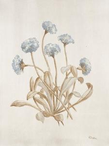 French Botanicals VII by Rikki Drotar