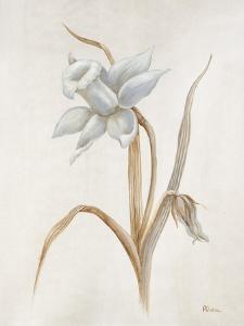 French Botanicals VIII by Rikki Drotar