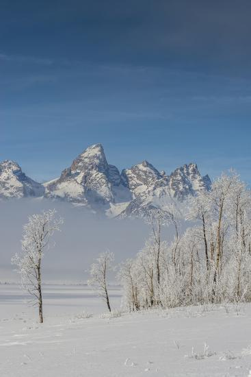 Rimed Cottonwoods and Tetons from Antelope Flats Road-Howie Garber-Photographic Print