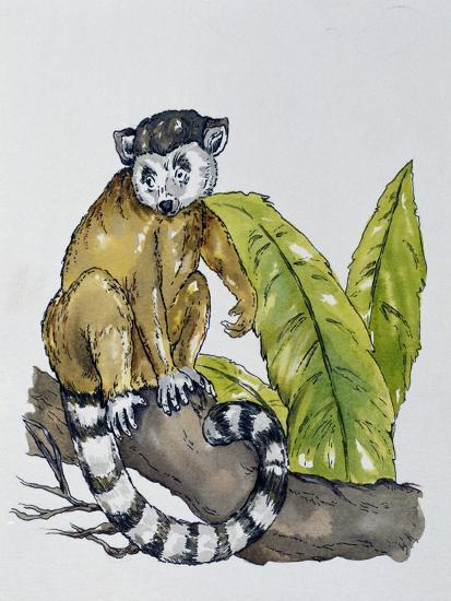 Ring-Tailed Lemur (Lemur Catta), Lemuridae--Giclee Print