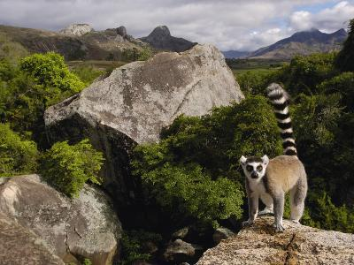 Ring-Tailed Lemur (Lemur Catta), Overlooking the Andringitra Mountains, Madagascar-Pete Oxford-Photographic Print