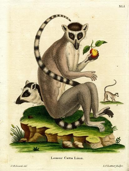 Ring-Tailed Lemur--Giclee Print