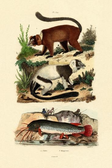 Ring-Tailed Lemurs, 1833-39--Giclee Print