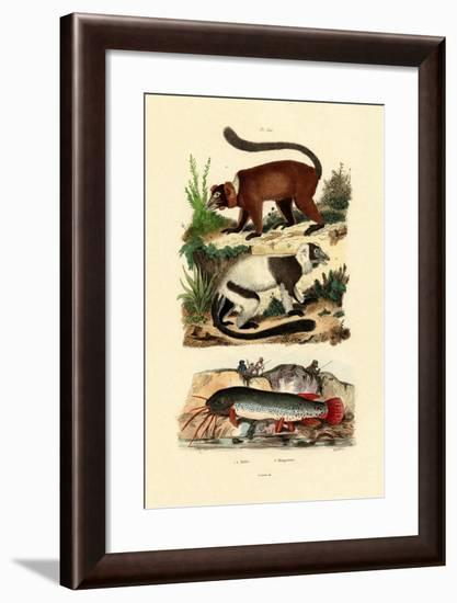 Ring-Tailed Lemurs, 1833-39--Framed Giclee Print