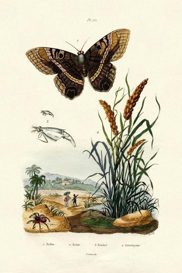 Ringlet, 1833-39--Giclee Print