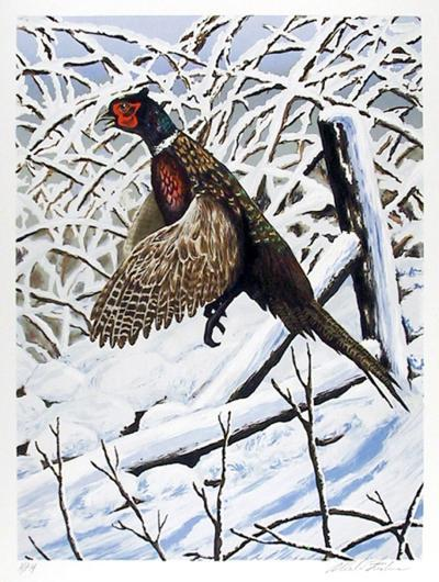 Ringnecked Pheasant-Allen Friedman-Collectable Print