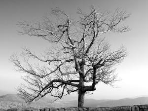 A Tree in a Bleak Location by Rip Smith