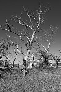 Dead Trees by Rip Smith