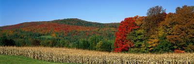 Ripe Corn Autumn Leaves Vermont USA--Photographic Print